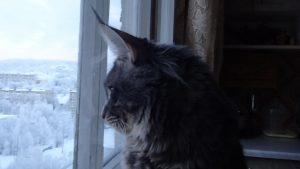 Вид из окна., зима, мейн кун,, Ирина Кириковская,